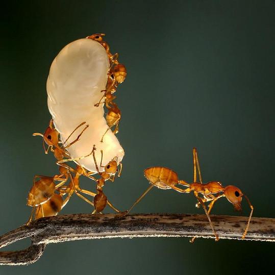 Říše hmyzu je neuvěřitelně krásná.