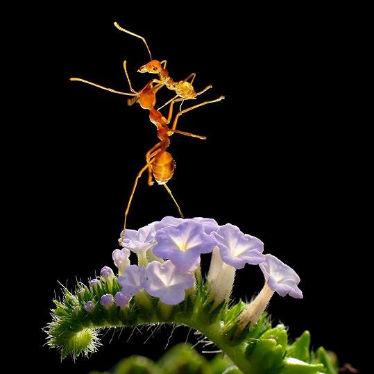 Neskutečné snímky z mravenčí říše.