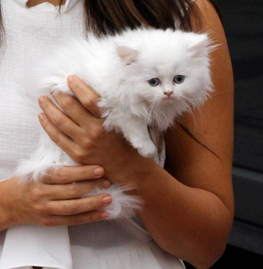 Koťátko působilo vylekaným dojmem.