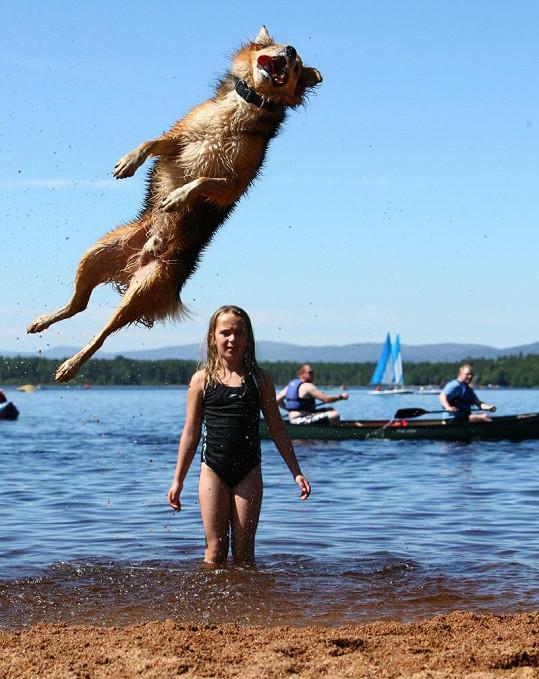 Tento pes je zřejmě světový rekordman.