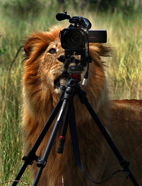 Statnému lvu se přístroj velmi zamlouval.