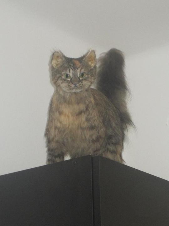 Kočička je jako živá. Až z toho běhá mráz po zádech.