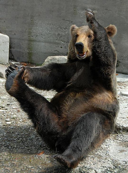 Cviky medvěda Michaila fascinují návštěvníky.