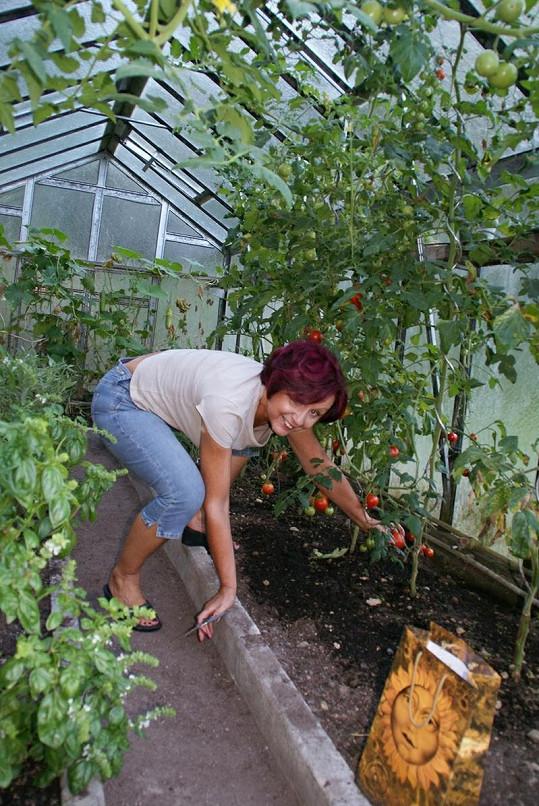 Ve skleníku trojnásobné Zlaté slavice najdete bylinky, okurky, rajčata, rajčata, rajčata a zase rajčata.
