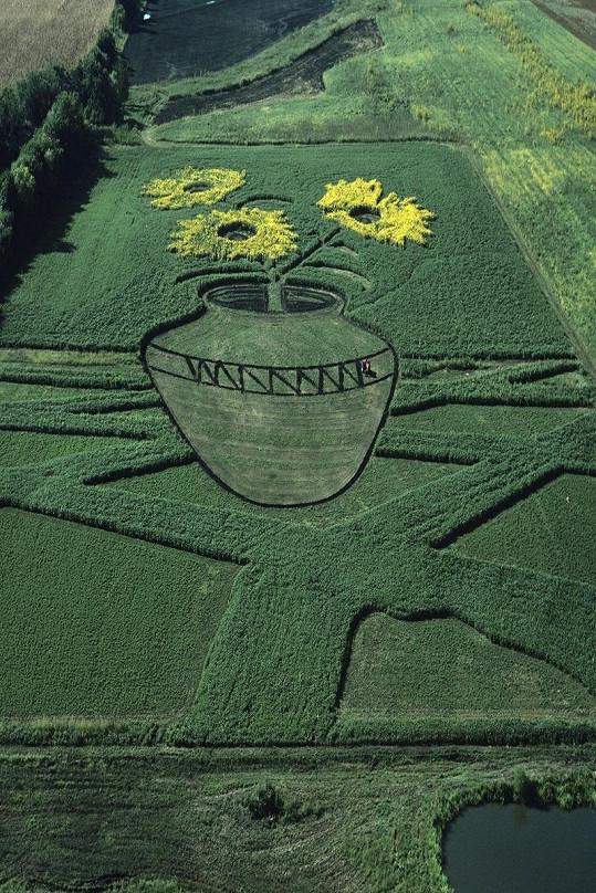 Slunečnice jako od van Gogha.