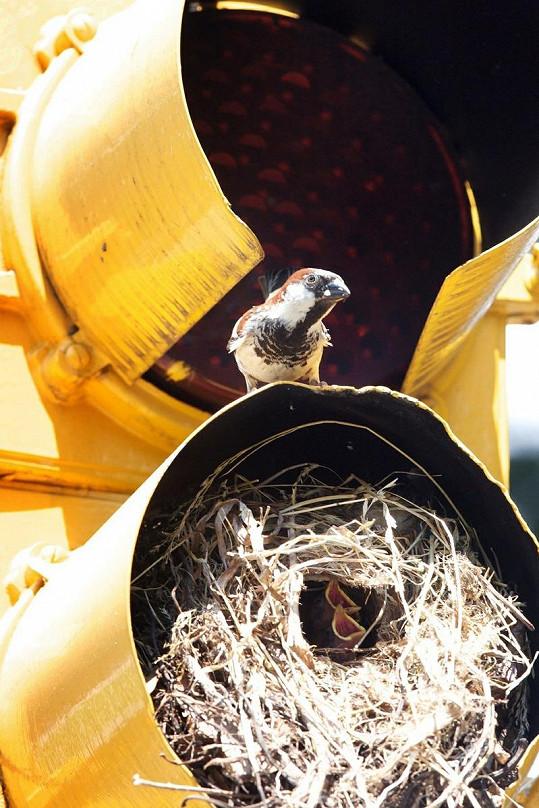 Semafor obývaný ptáky.