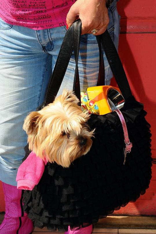 Pes Krampolové Žanetka si při odchodu z obchodu hoví na ukradených šatičkách.