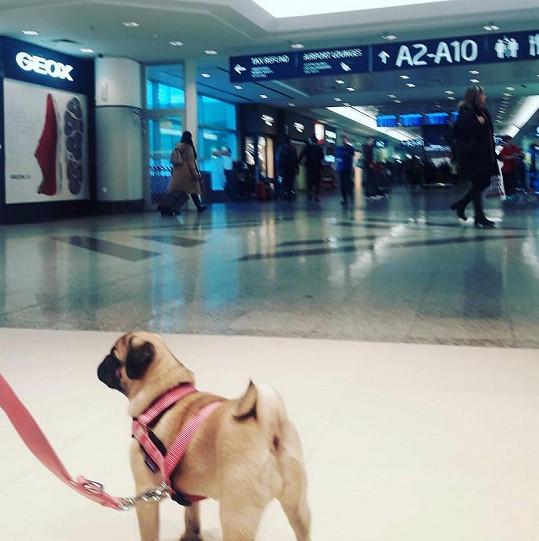 Herečka přepravila do Izraele dalšího psa.