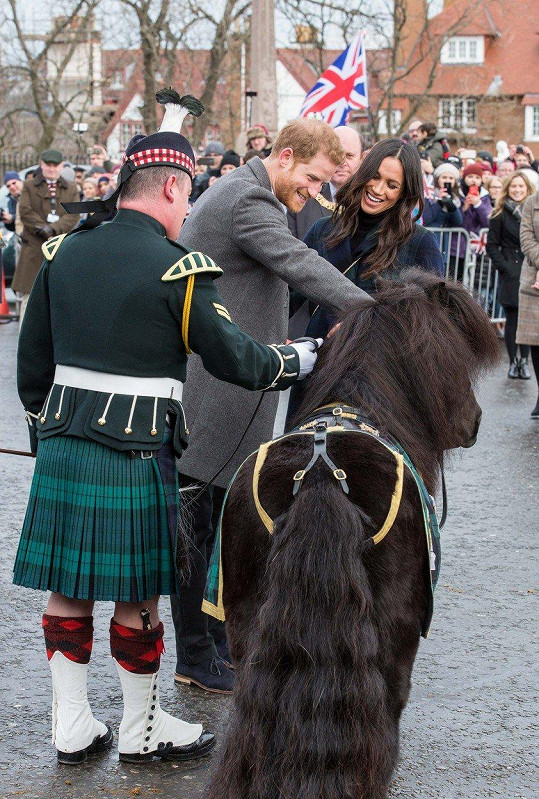 Harry si chtěl pohladit poníka.
