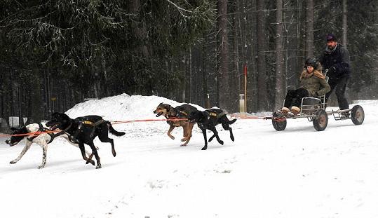 Takhle Michaelu Štoudkovou neznáme, projela se psím spřežením.