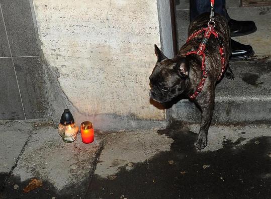Amálka se smutně dívala na svíčky zapálené na počest její paničky.