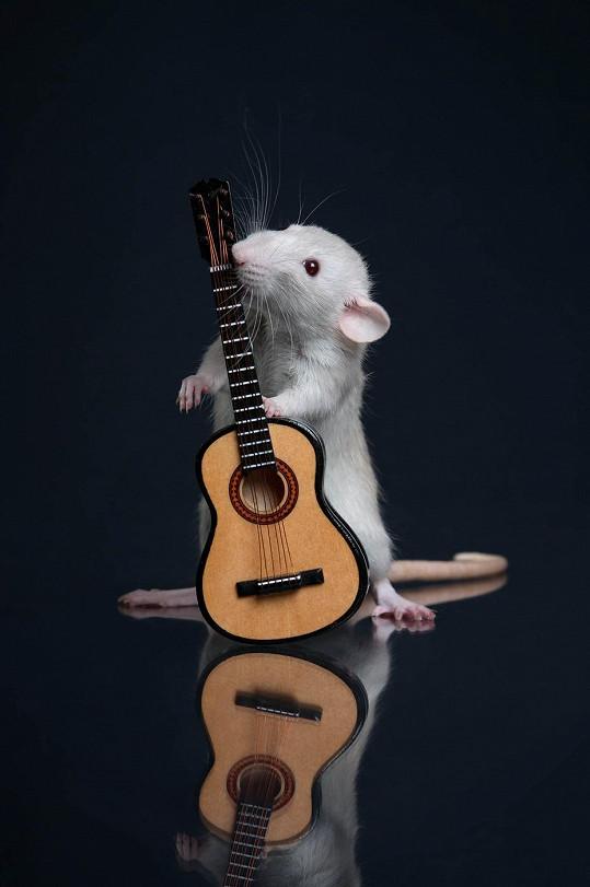 Zvládne i hru na kytaru?