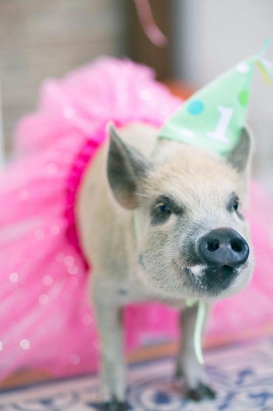Jamon na oslavě svých prvních narozenin