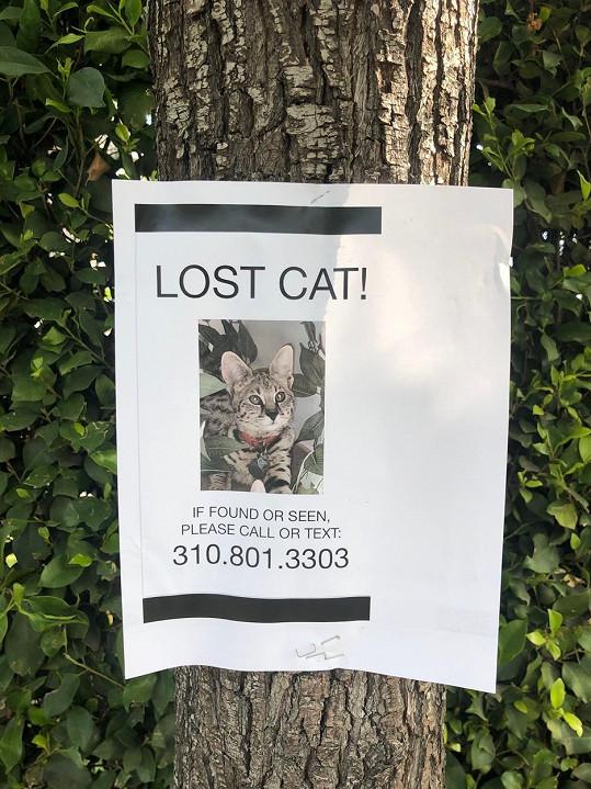 Se Sushim se nenudí, v únoru se ztratil.