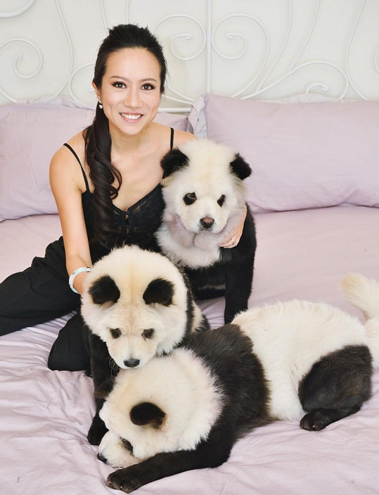 Meng Jiang své psy přibarvuje.