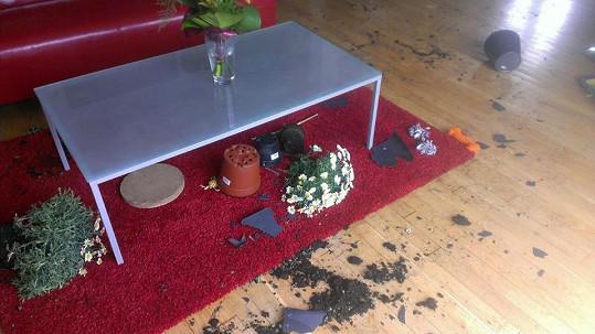 Moničin labrador se nudil a připravil paničce překvapení.