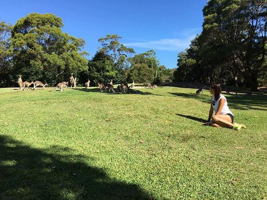V Austrálii muselo proběhnout setkání s klokany.
