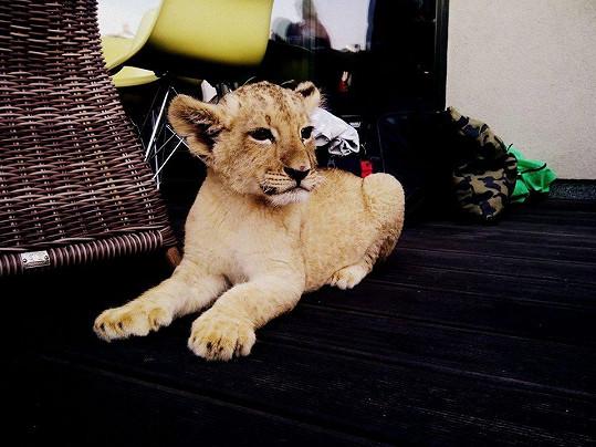 Lvíček byl hvězdou natáčení.
