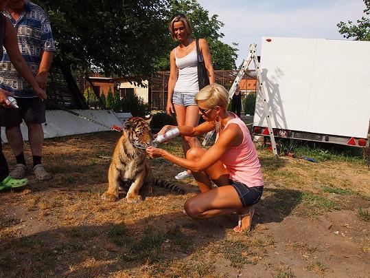 Hana Mašlíková s tygřím miminkem