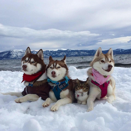 Rosie má novou rodinu.
