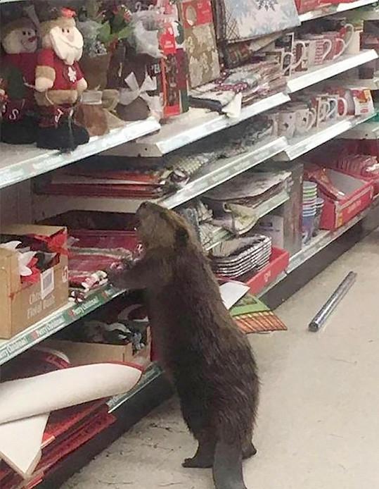 Předvánoční nabídka přilákala bobra.