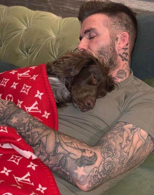 David Beckham s rodinným mazlíčkem Olive