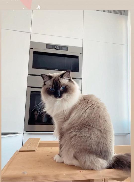 Stěhovat se bude i kočka.