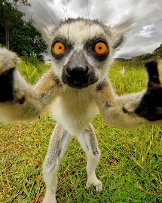 Lemur by mohl rovnou na titulku National Geographic.