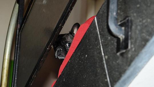 Amálka Jiřiny Jiráskové je nyní nejsmutnějším psem na světě.
