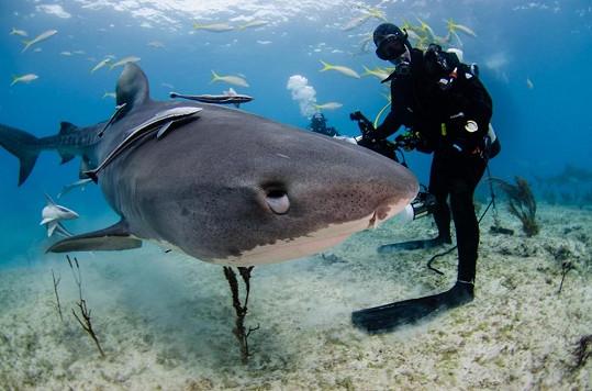 I žralok může být přítulný.
