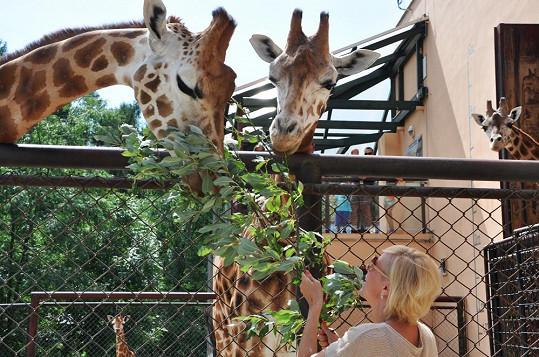 Dvě z olomouckých žiraf nesou jména Renata a Marlen.