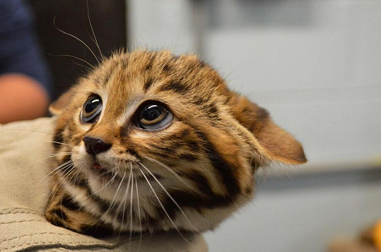 Koťátko dostalo jméno Drogon.