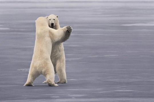 I v polárních oblastech žhne láska.