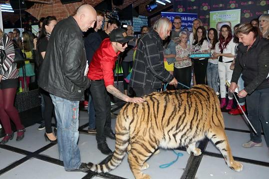 A pohladil si tygra.