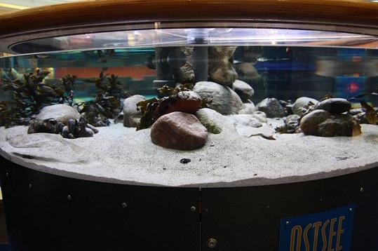 Jedno z akvárií, které mohou návštěvníci obdivovat.