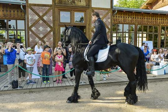 Na trénování využívá David jiného koně, tento byl spíš pro parádu.