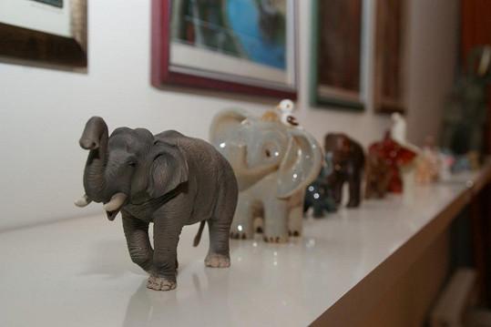I Petra Janů sbírá slony.