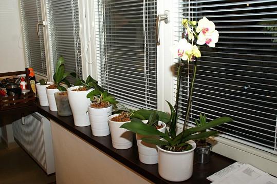 Na okně obráceném na jih Petra pěstuje oblíbené orchideje.