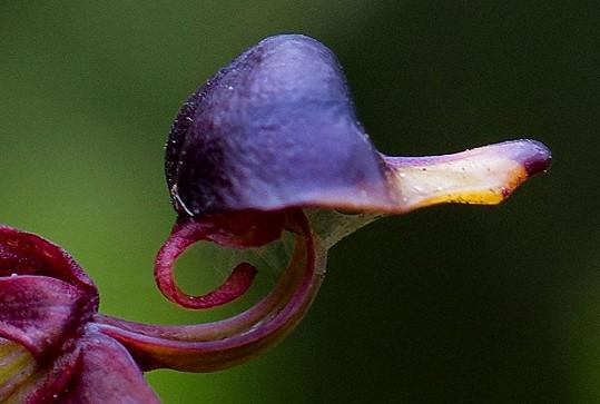 Příroda vytváří originální díla.
