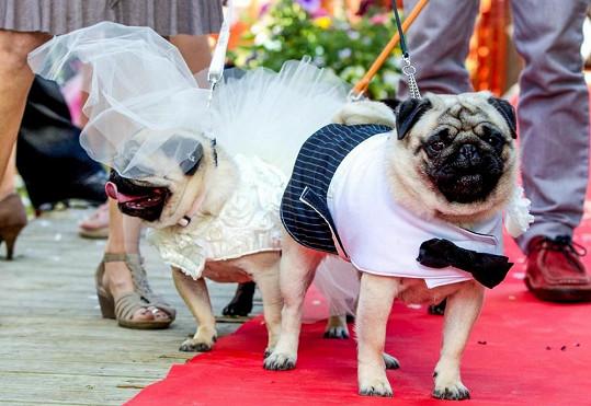 Betty a Albert už jsou svoji.