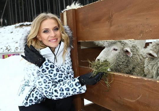 Kráska byla nadšená z místních oveček.