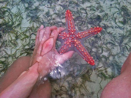 Karolína našla hvězdici.