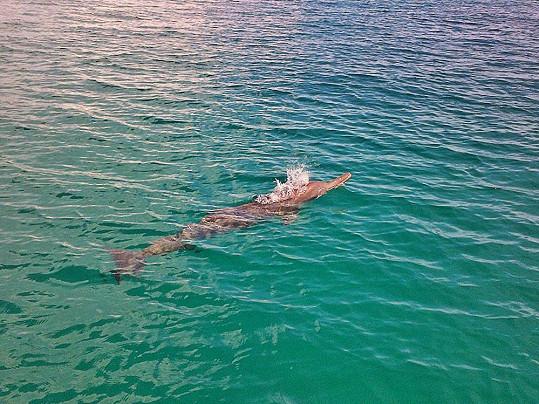 Karolína se koupala v moři s divokými delfíny.
