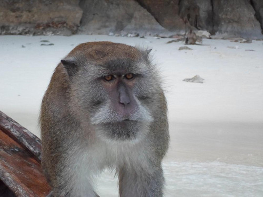 Tato opice na Zdeňka nečekaně vystartovala. Pomohl až dlouhý hák místního obyvatele, který opici zastrašil.