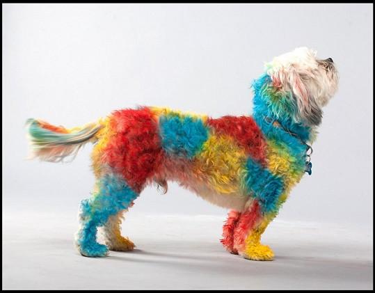 To jsou barvičky, panečku.