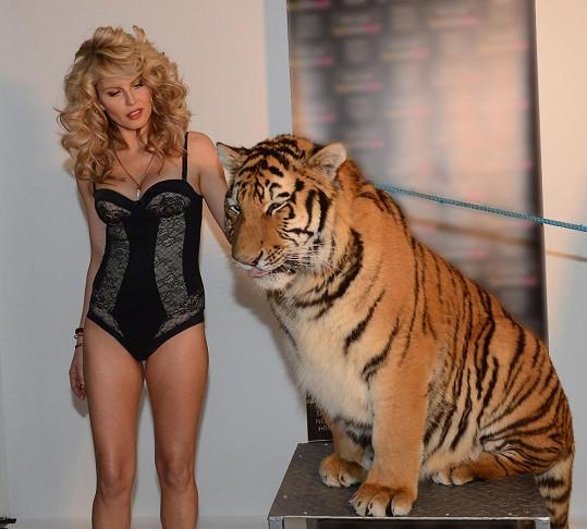 Modelka k tygrovi přistupovala s velkým respektem.