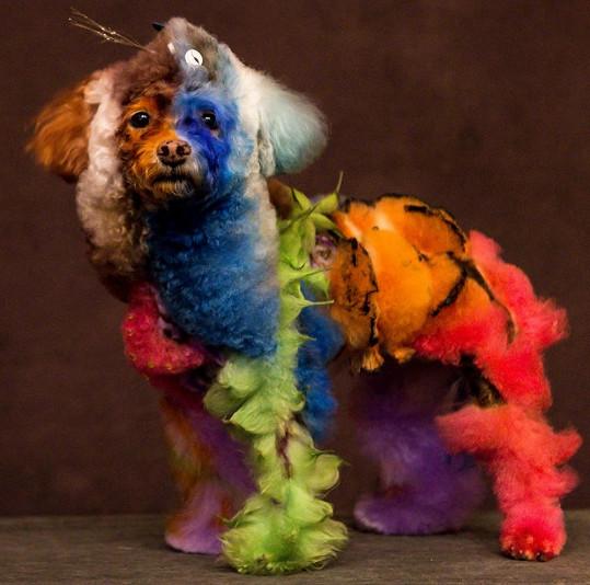 Příroda na zbarvení psů šetřila, páníčci to dohnali.