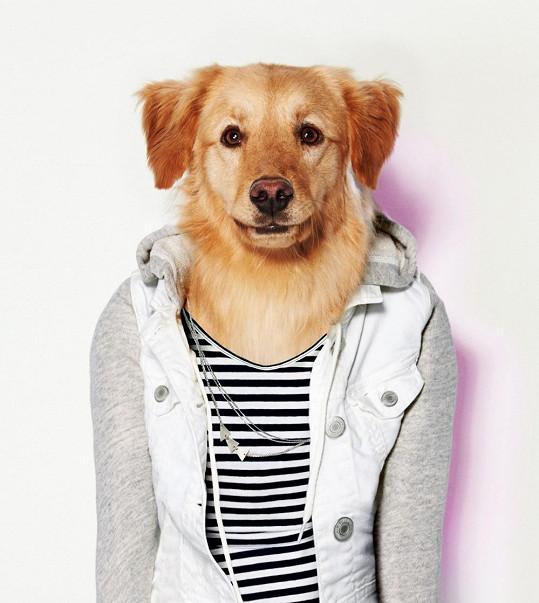 I váš pes už může mít v boudě pár kousků podle poslední módy.
