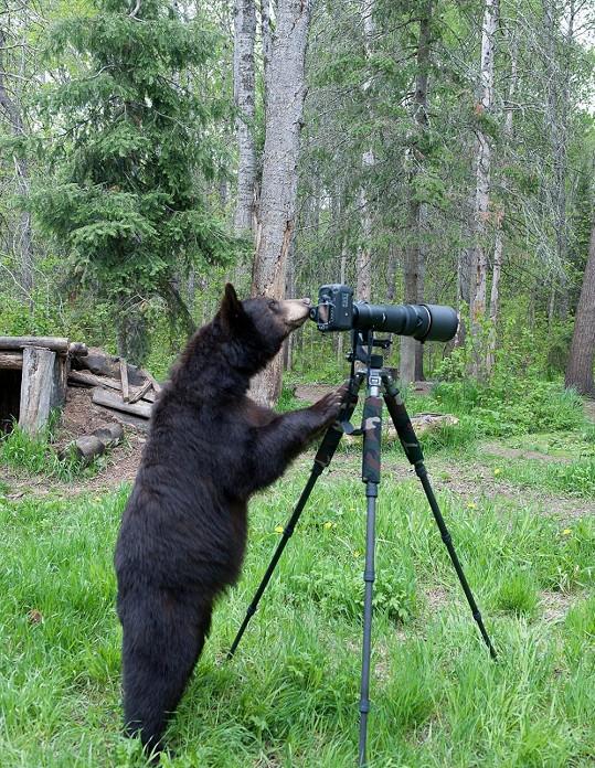 Medvěd sotva dohlédl do hledáčku.