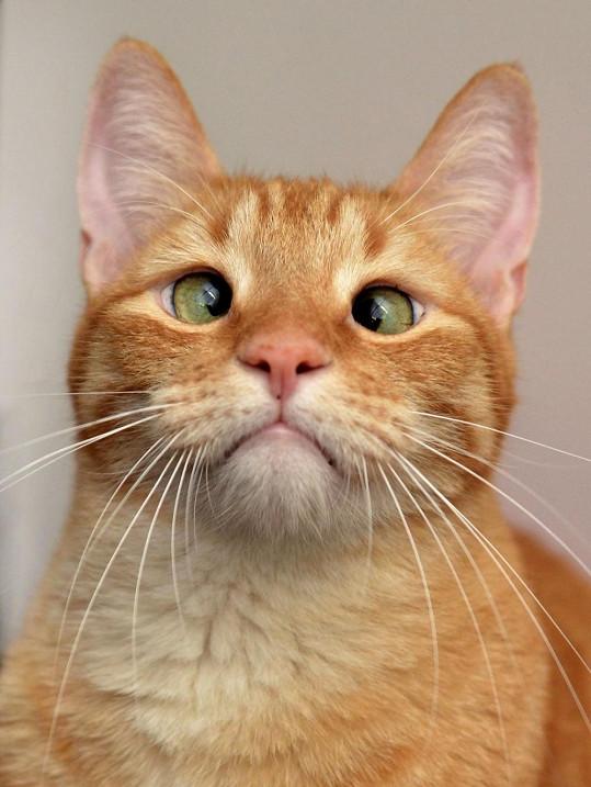 Šilhavý kocourek je roztomilou raritou.